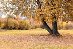 Park landscape lonely tree Stock Images