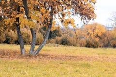 Park landscape lonely tree Stock Image