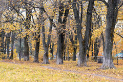 Park landscape lonely tree Stock Photo