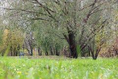 Park landscape lonely tree Stock Photos