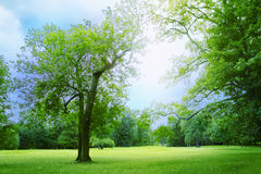 Park Royalty Free Stock Images