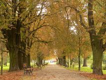 Park lane in autumn royalty free stock photography