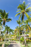 Park with lane with coconut palm trees Royalty Free Stock Photo