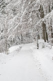 Park lane covered by snow royalty free stock photography
