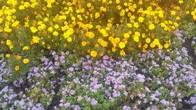 Park Lane flowers Stock Image