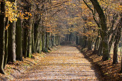 Park Lane In Fall Royalty Free Stock Photo