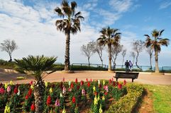 Park lane with palm trees and colourful flowers against sea with Stock Photo