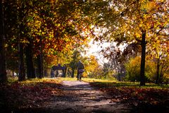 Park lane with people walking on a beautiful autumn day royalty free stock photos