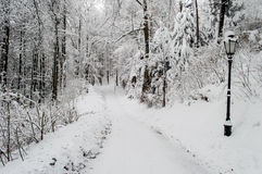 Park lane with street lamp covered by snow royalty free stock image
