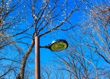Park lantern at blossom time Stock Photo