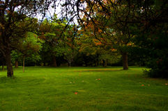 Park Lawn clearing with trees around Stock Image