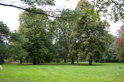 Park Lawn clearing with trees around Stock Photos