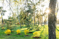 Park lawn. Trees, green grass and sun. Green and yellow plant. Park lawn. Trees, green grass and sun royalty free stock photo