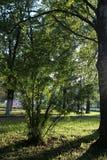 Park leaf sun Stock Photography