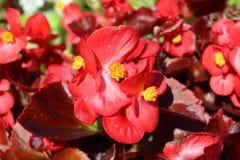 Park Lednice. Flowers in Castle park, Lednice Castle, South Moravia,Czech Republic Royalty Free Stock Photos