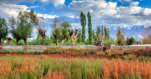 Park in Leh, Ladakh Royalty Free Stock Photography