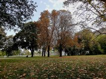 Park obrazy royalty free