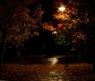 Park lights with wet path covered in leaves stock photo