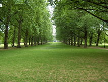 Park in London. A beautiful park in London royalty free stock photo