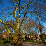park in london  sky and old dead tree Stock Photography