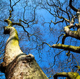 park in london  sky and old dead tree Royalty Free Stock Photo