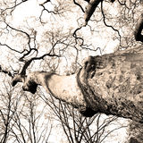 Park in london spring sky and old dead tree Royalty Free Stock Photo