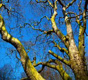 park in london spring sky and old dead tree Royalty Free Stock Photos