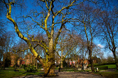 park in london spring  tree Royalty Free Stock Images