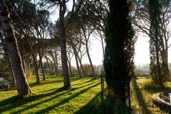 Park of Lourmarin. Provence-Alpes-Cote d`Azur. France Stock Image