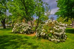 Park Ludovita Stura park in the city of Zvolen. Blossoming flowers in Park Ludovita Stura park in the city of Zvolen during summer, Europe, Slovakia royalty free stock photos