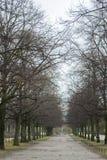Park in München Stockbild