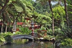 The park on the Madeira Royalty Free Stock Photos