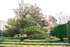 Park in Madrid with hedge and trees royalty free stock images