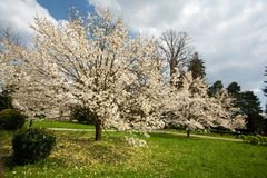 Park with magnolia trees Royalty Free Stock Photos