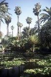 Park in Marrakesh,Morocco. Lake in the Park Majorelle in Marrakesh,Morocco Stock Photography