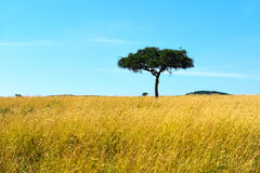 Park Masai Mara. African savanna landscape of the National Park Masai Mara Stock Image