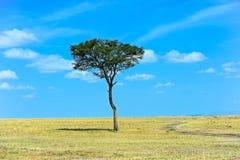 Park Masai Mara Stock Image