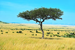 Park Masai Mara Stock Photo