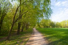 Park in May Royalty Free Stock Image