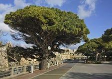 Park in Mdina town Malta Royalty Free Stock Image