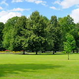 Park, meadow and blue sky Royalty Free Stock Image