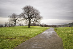 Park met bomen in Edinburgh Stock Foto's