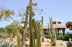 Park met cactus exotische tropische woestijn tegen witte steengebouwen in Mexicaanse Latijns-Amerikaanse stijl tegen de blauwe he royalty-vrije stock afbeeldingen