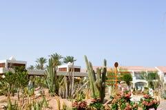 Park met cactus exotische tropische woestijn tegen witte steengebouwen in Mexicaanse Latijns-Amerikaanse stijl tegen de blauwe he royalty-vrije stock foto