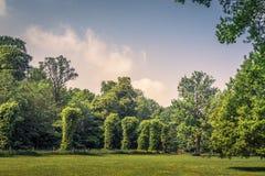 Park met diverse groene bomen royalty-vrije stock foto's