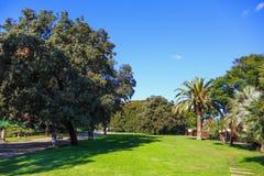 Park met groen gras met palmen en bomen stock foto's