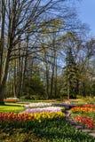 Park met multi-colored de lentebloemen Royalty-vrije Stock Afbeeldingen