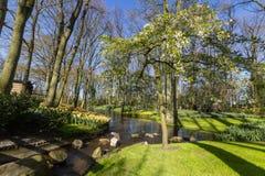 Park met multi-colored de lentebloemen met pond Royalty-vrije Stock Fotografie