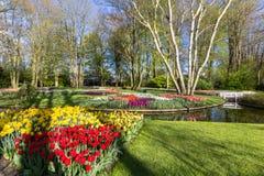 Park met multi-colored de lentebloemen met pond Stock Foto's