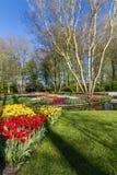 Park met multi-colored de lentebloemen met pond Royalty-vrije Stock Foto